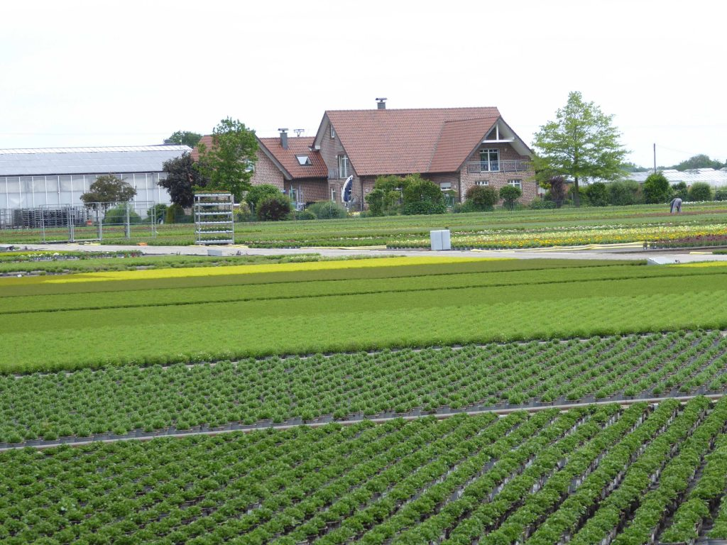 Foto 1_Gartenbau_unter_freiem_Himmel