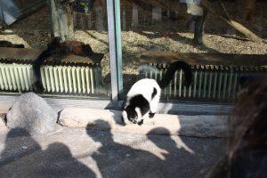 Foto Duisburger Zoo Bt Juni 2015 2 Homepage